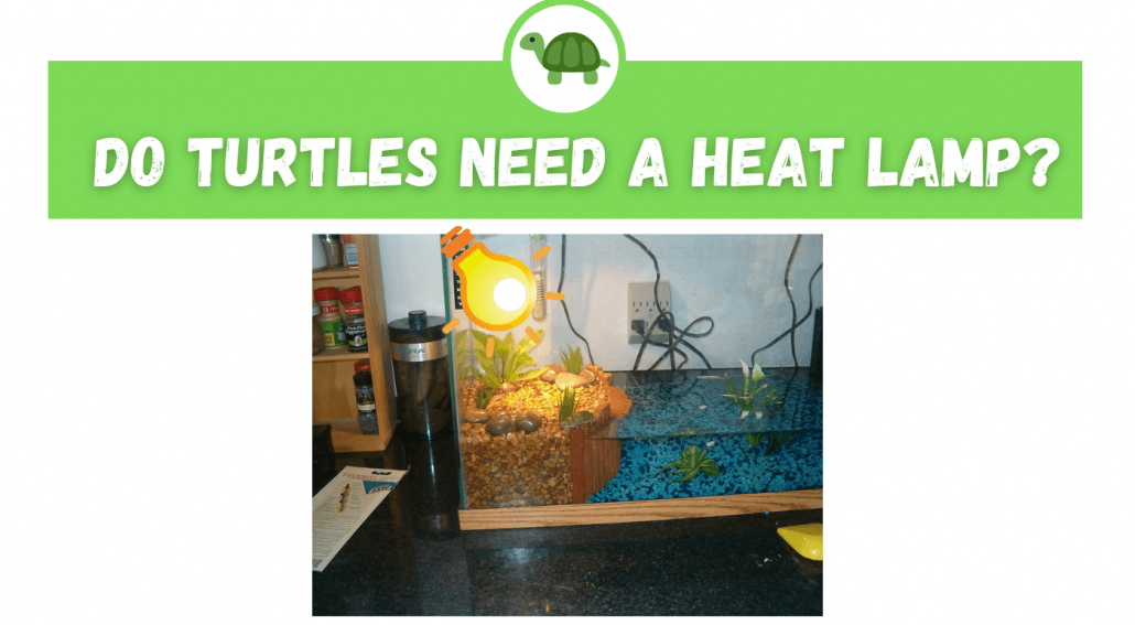 Do Turtles Need A Heat Lamp