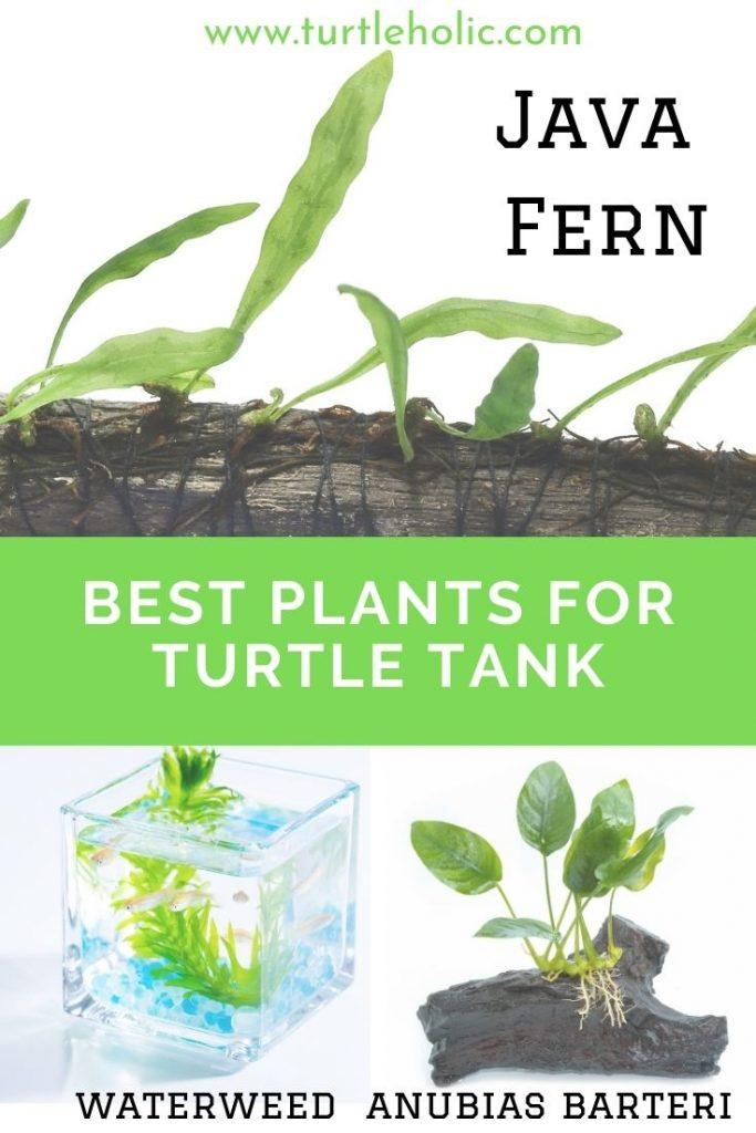 plants for turtle tank