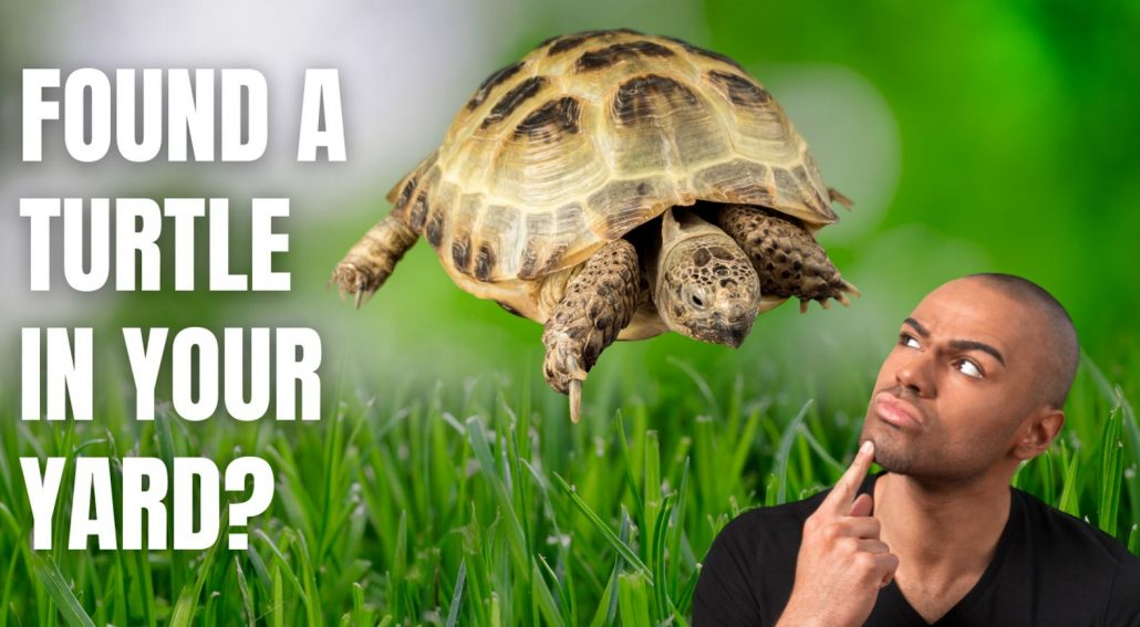 What to do if You Find a Turtle in Your Yard