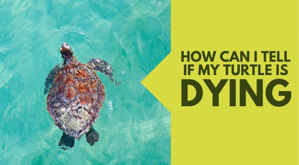 How to Tell If My Turtle is Dying
