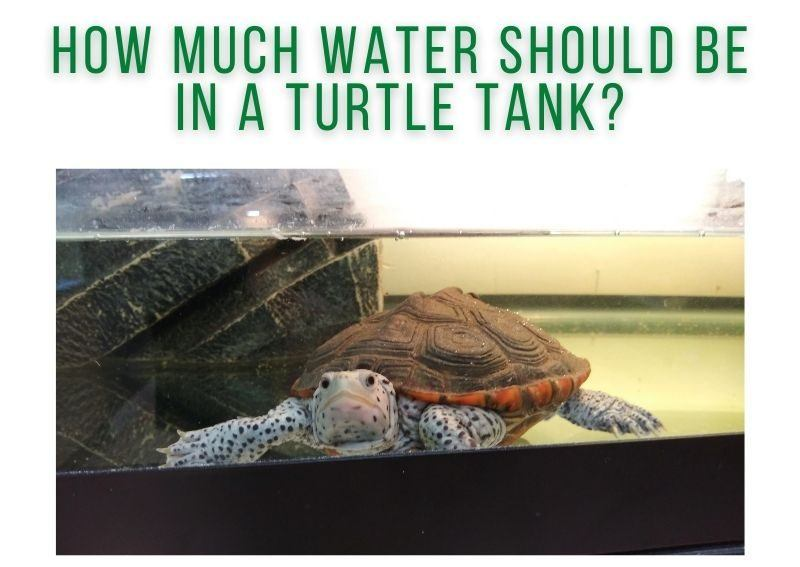 How Much Water Should Be In A Turtle Tank