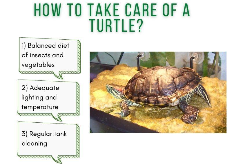 how to take care of a turtle