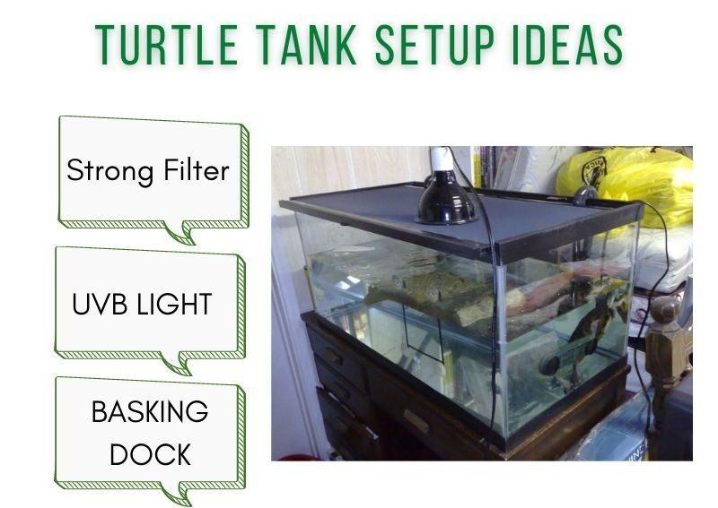 turtle tank setup ideas