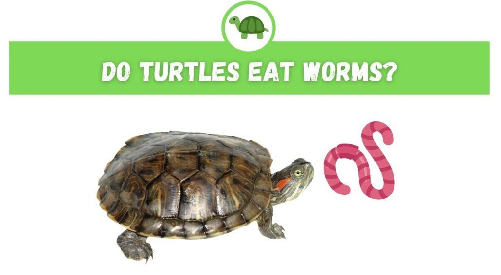Do Turtles Eat Worms?