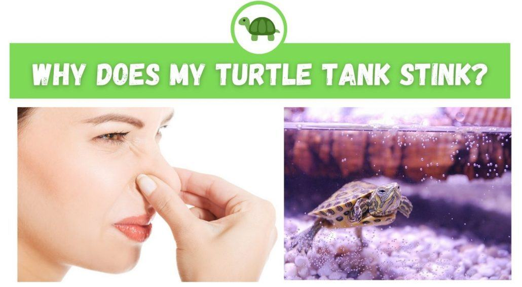 Why Does My Turtle Tank Stink