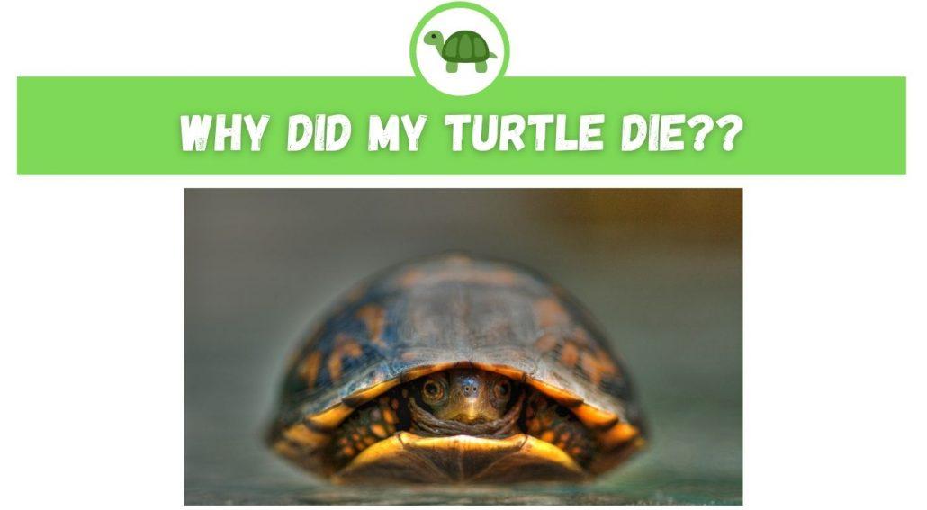 Why Did My Turtle Die?